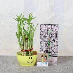 Rakhi Gift of Two Layer Good Luck Bamboo Plant for Brother