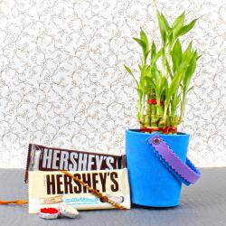 Good Luck Plant with Hershey Chocolates For Bhai